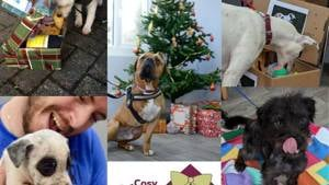 Cosy Kennels Shoebox Appeal 2019
